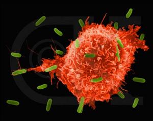 Thử nghiệm ngẫu nhiên giai đoạn II của AFTVac trong điều trị ung thư biểu mô tế bào gan tái phát sau phẫu thuật